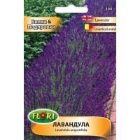 Лавандула / Lavandula angustifolia