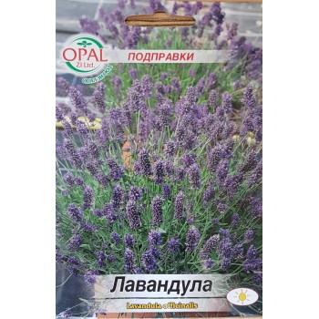 Лавандула / Lavandula officinalis