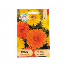 Медицински невен / Calendula officinalis