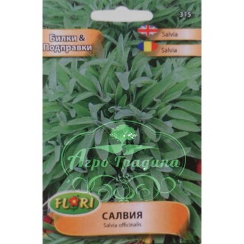 Салвия / Salvia officinalis