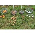 Уред (Рол-блитц) за събиране на плодове с размер до 25 мм в диаметър