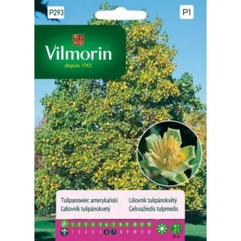 Семена за Лирово дърво (дърво лале) - Liriodendron tulipifera