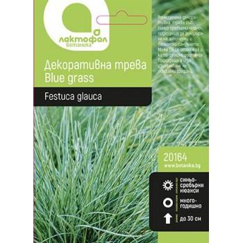 Семена за Декоративна трева Blue grass