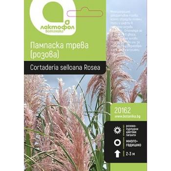 Семена за Пампаска трева розова