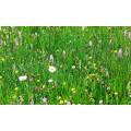 Тревна смеска Японска поляна 1кг