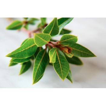 Дафинов лист (лавър, дафин)