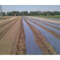 Перфорирано Фолио за предпазване (мулчиране) на почвата с сребърно-черен филм 1,2х20м.
